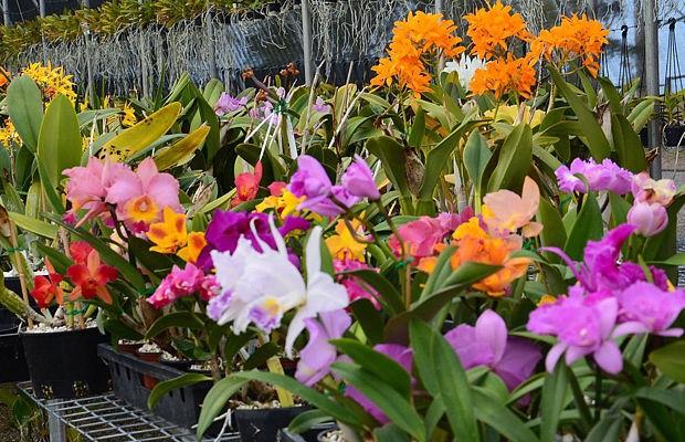 orhids store.jpg