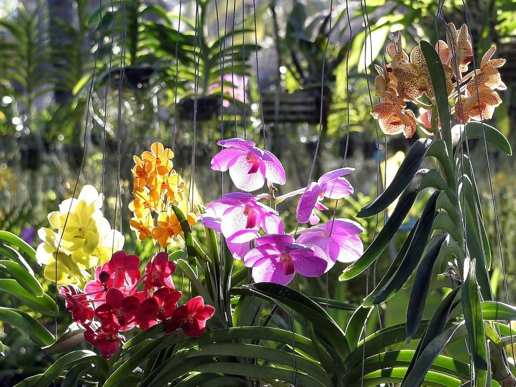 orhids.jpg